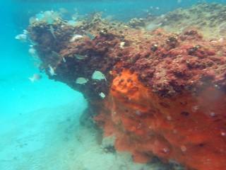 Snorkling at Ocean Reef Park | by aaronwormus