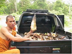 Carbon Covenant - Cambodia: Bamboo-shoots-from-the-mcf | by InterfaithPowerandLight