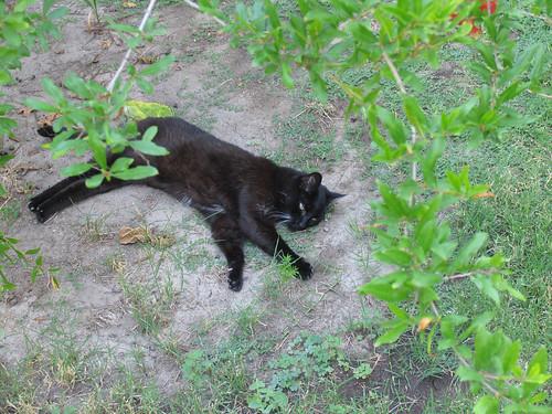 Grendel Enjoying the August Heat | by slumbering