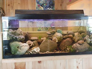 New tidal tank | by Sherwood Island Friends