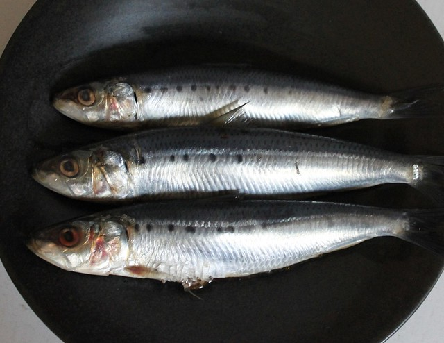 sardine season (before)
