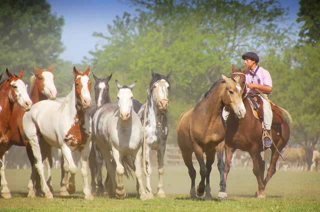 Agarrando caballo