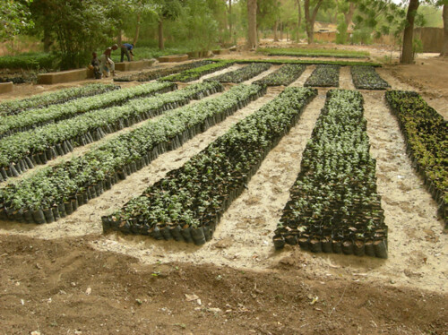 Carbon Covenant - Cameroon: Seedlings-5-2010 | by InterfaithPowerandLight