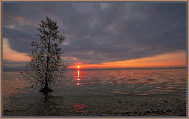 Dawn, tree on the lake - Albero sul lago, alba.