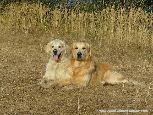2009_09_10 - Vojkovice - Ares a Bonnie