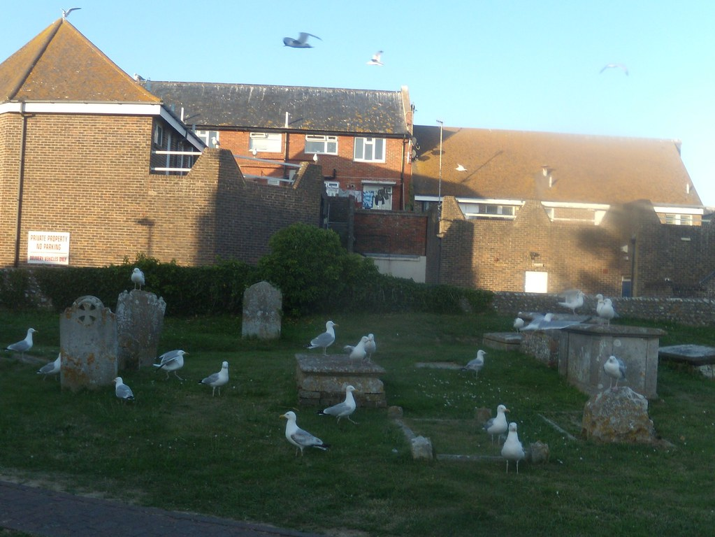 Seagulls.. ..nonchalantly ignoring a source of chips. Glynde to Seaford
