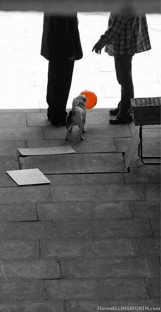 Dog with an orange balloon