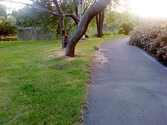 bunny in Zuiderpark, Den Haag