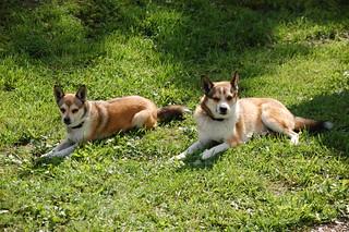 Lady og Heike slapper av i varmen