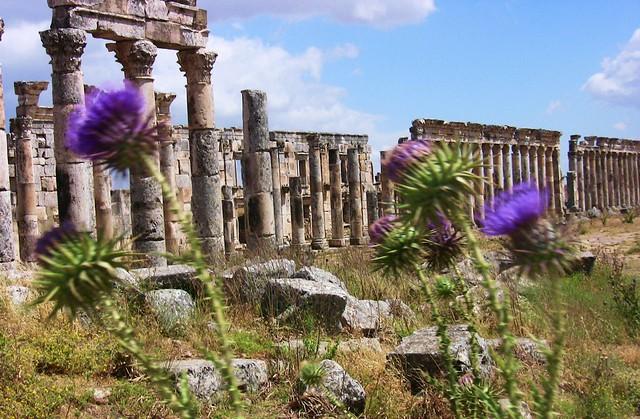 SYRIEN-Apamea, Säulen mit Disteln, 10640