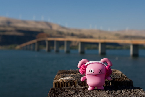 Uglyworld #723 - Ox at The Columbia River | by www.bazpics.com
