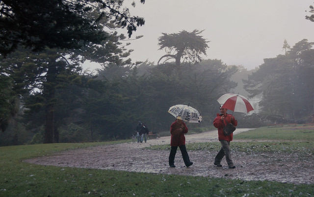 Rain and wind in San Francisco.  Sutro Park, The Richmond (2008)