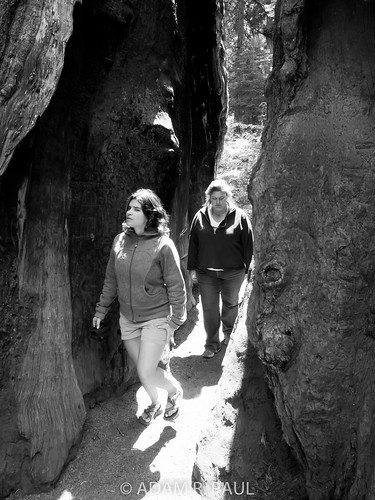 Elica & Sarah in Sequoias | by Adam R. Paul