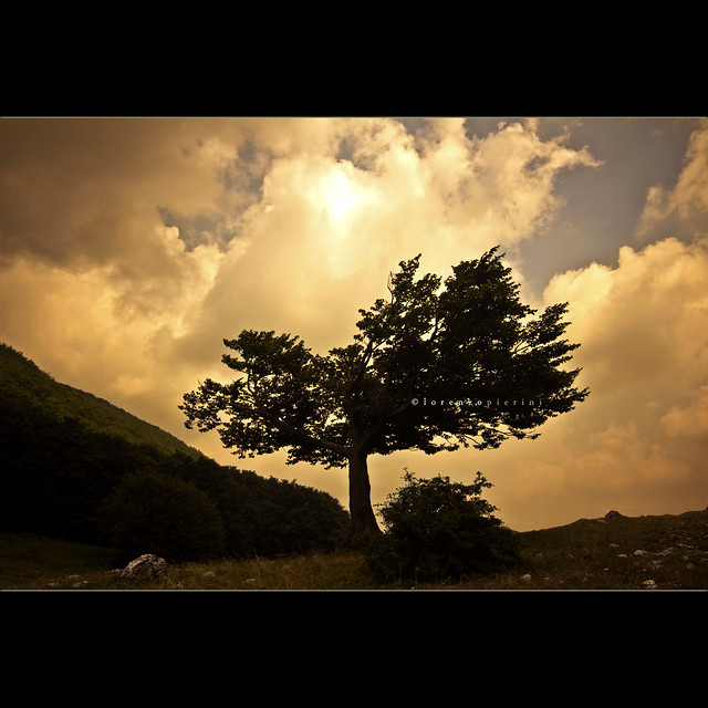 #4. The Tree of Life