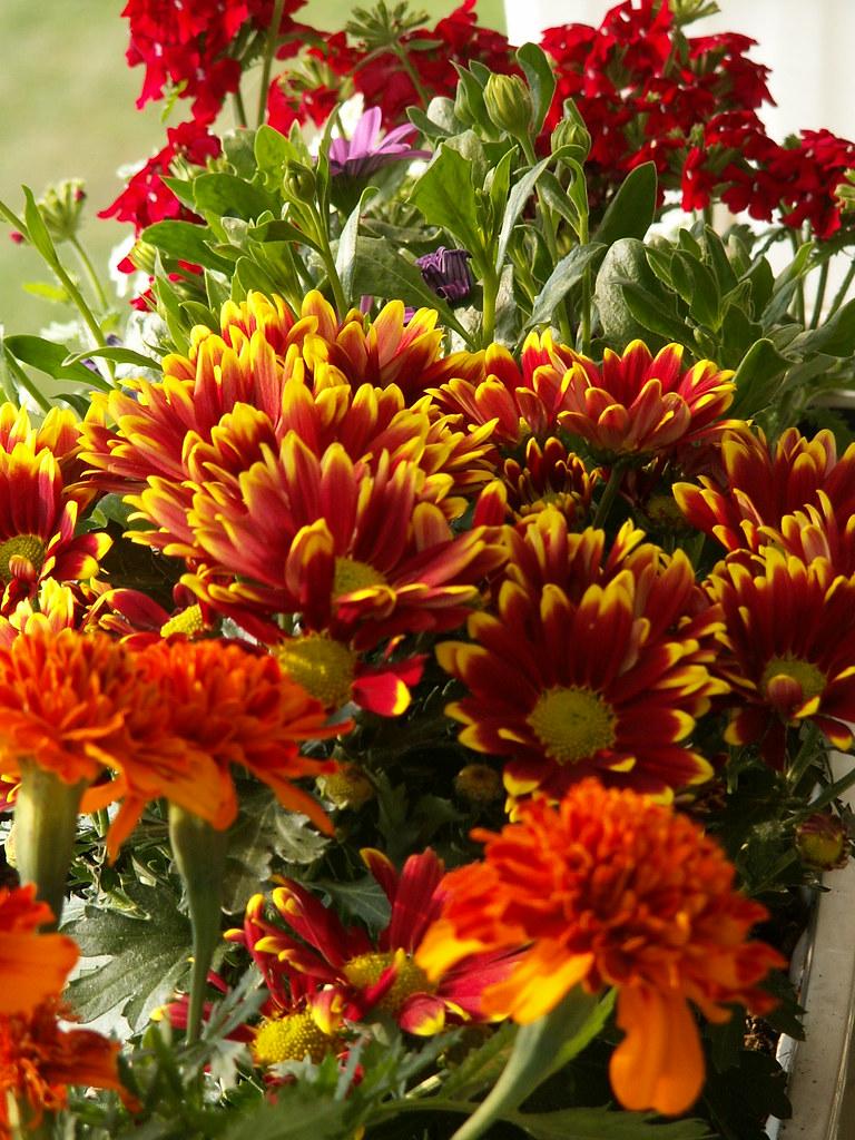Die schönen Farben der Blume glänzen zu den hohen Tänzen der Sonnenstrahlen die das Azur umgrenzen wo sich des Himmels Blumen herrlich zeigen dürfen sich die Sterne  auch das Dunkel der Nacht nicht mehr rauben in den schön geflochtnen Lauben 15