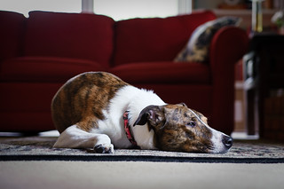 Day 297: A Dog's Life | by KenWorley