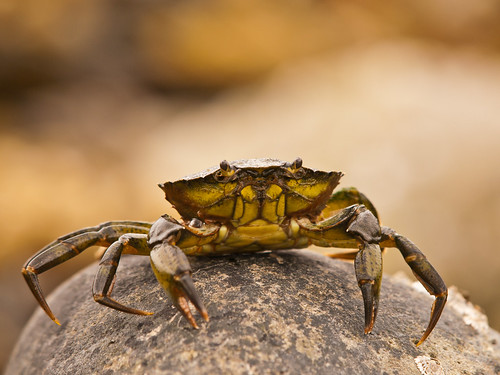 Crab | by wwarby