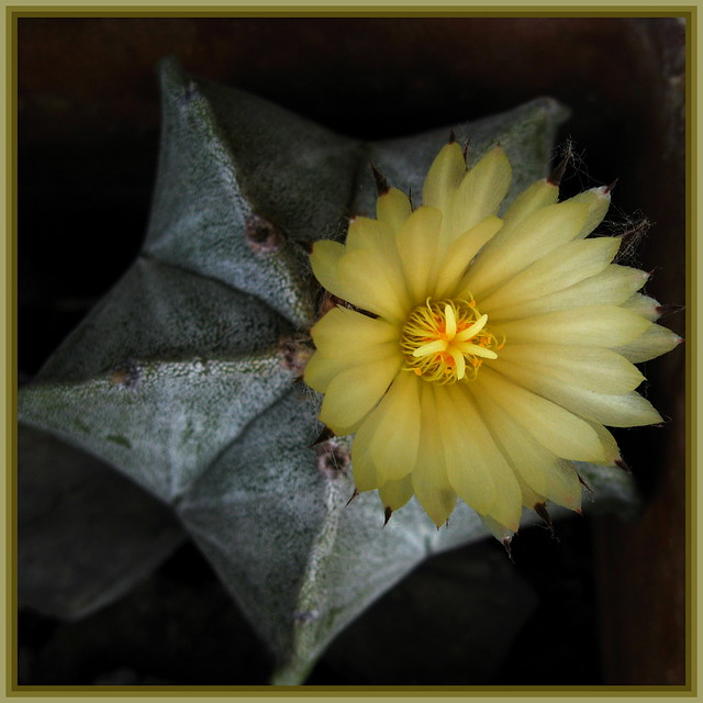 Flower from a star