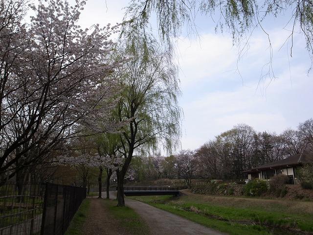 <p>e)写真ではうまく伝わらないのが残念・・・柳の若草色と桜の桜色のコントラストがたまらなく好き</p>