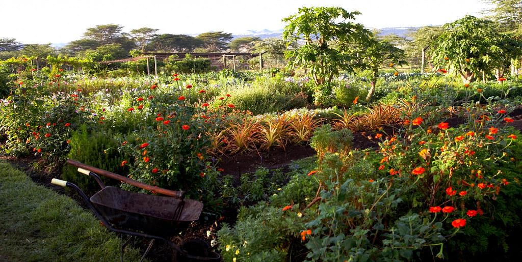 Sue Roberts' organic vegetable garden at Sirikoi, Kenya