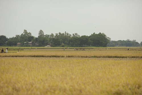 Crop Harvest | by IFPRI