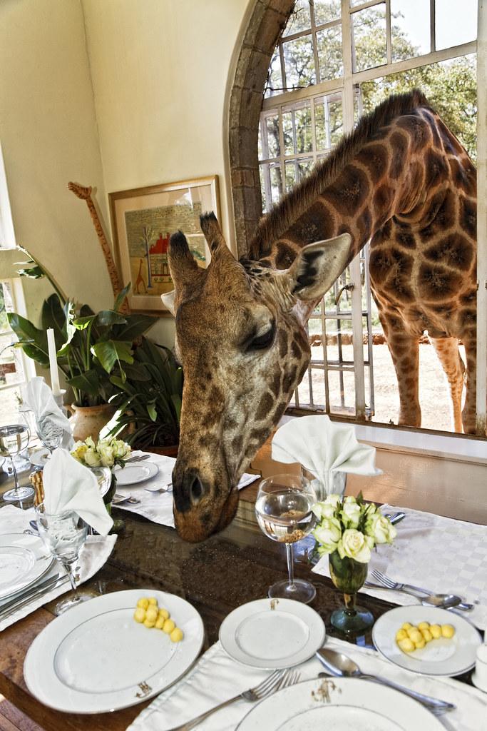 Luis Sanchez Davilla Giraffe Manor´s | XV Edición del Concur… | Flickr