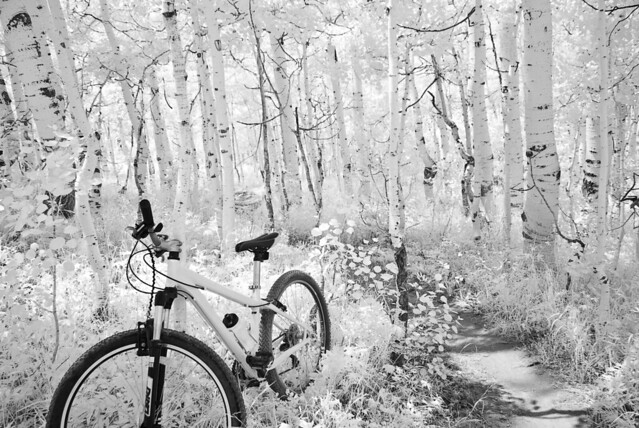 Alpine Biking