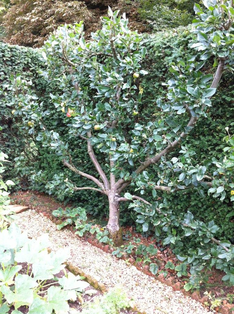 Cordon Fruit Tree Gentleman S Cottage Garden Sandra Hall Flickr