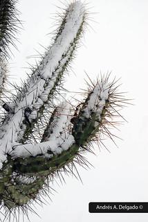 El frío del desierto (The cold of the desert)