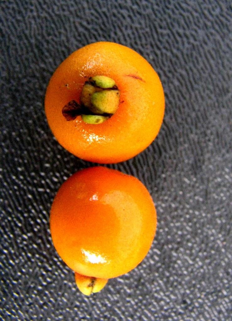 Eugenia koolauensis