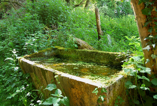 Le vieux bassin - Merri (Orne)