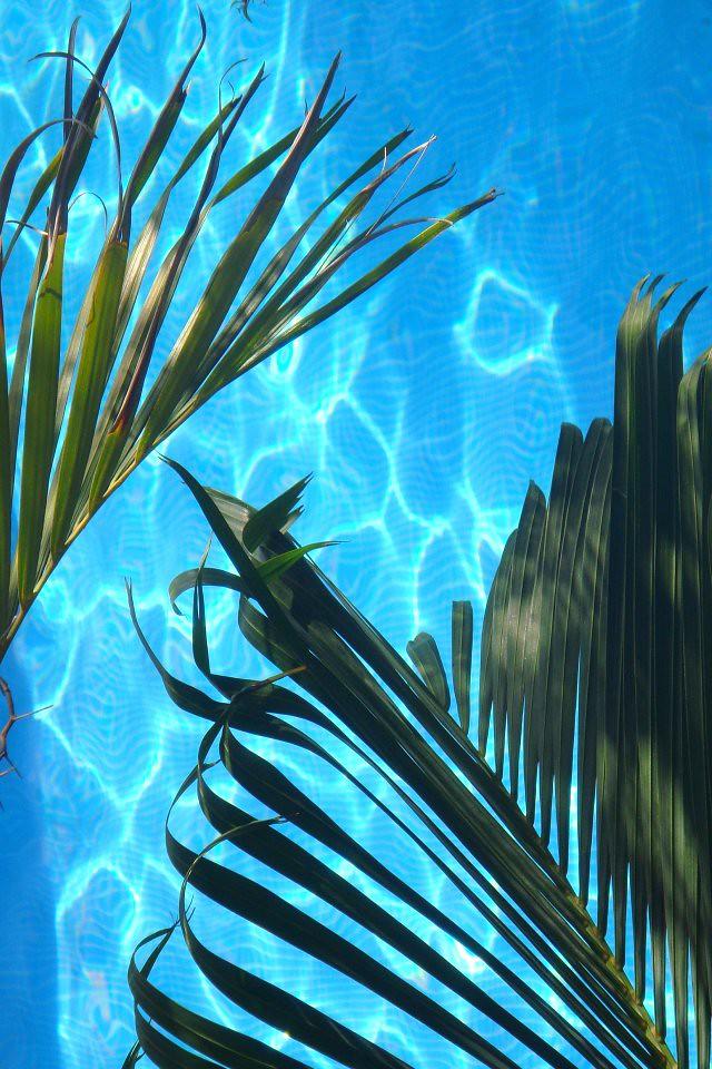 Mango Bay Pool | iPhone Wallpaper 640x960 | Alex Hopkins