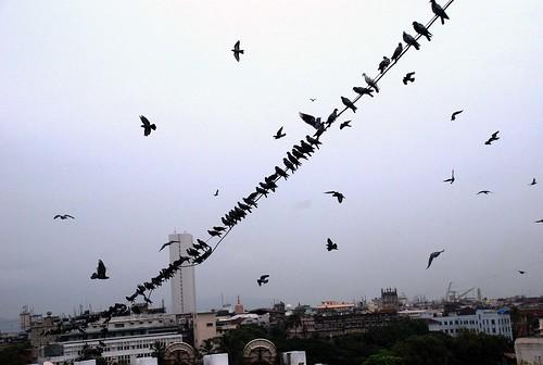 mumbai churchgate fortarea gatewayotindia pigeonsofmumbai churchgatearea outsidener