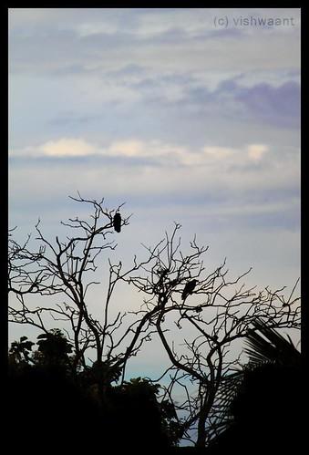 blue india black green birds canon eos waiting asia kerala wait crows 500d thiruvananthapuram vishwaant kissx3 t1i vishwaantin