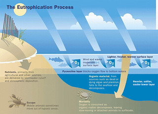 The Eutrophication Process | by eutrophication&hypoxia