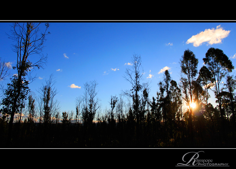 Late Sun Shines Through Burnt Bushland