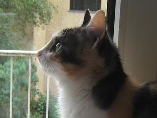 Missy am Balkon