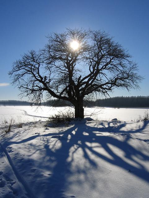 Sun, tree and shadow