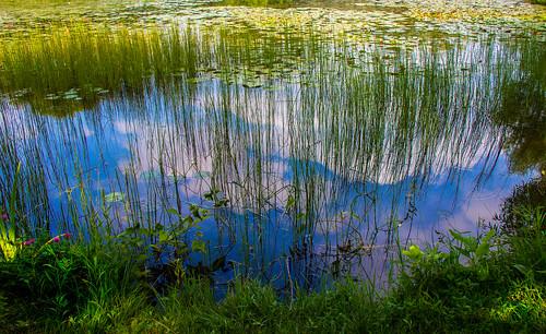 plants reflection clouds montréal jardin nuages botanique plantes étang jardinbotanique réflexion fleursplantesjardinbotanique