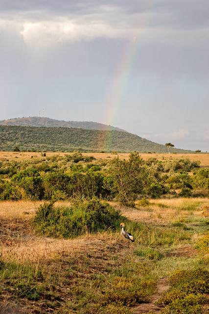 Rainbow over the Masai Mara, Kenya