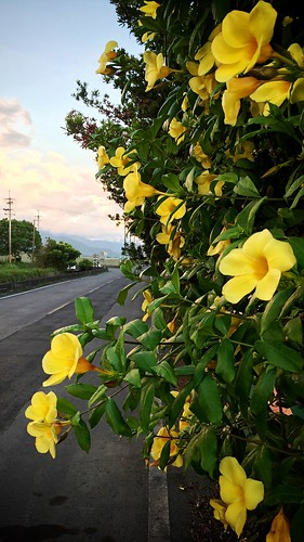 tropical taiwan flower sunset