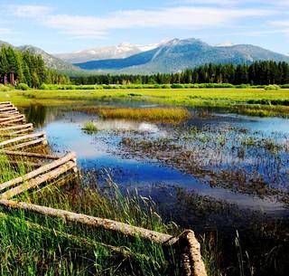 Mountain Meadow ,  Sierra Nevada Mountains