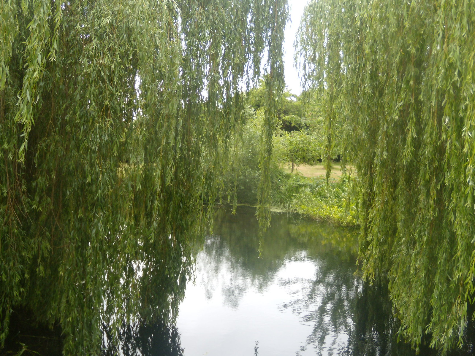Willows at the millpond Kelvedon circular