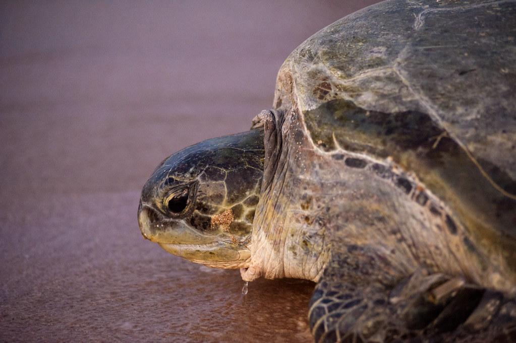 Ras AlJinz Turtles Reserve