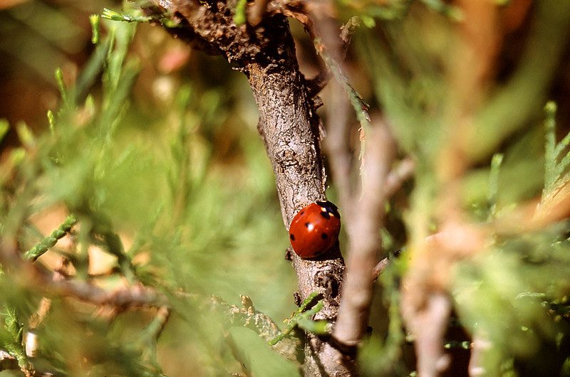 Ladybird 01