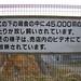 コケコッコー共和国 - Kokekokko Republic // 2010.02.13 - 08