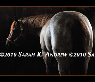 Camelot Auction, week of 7/14/10 | by Rock and Racehorses
