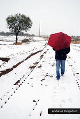 Un largo y frío camino a casa (A long and cold way home)