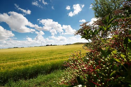 lund field barley skåne open sweden bluesky well explore elder elderberry öppet nikond300 bibble5 fotosondag