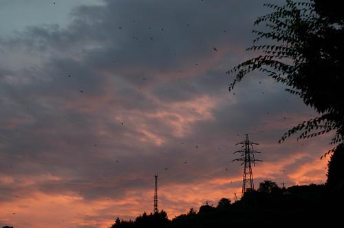sunset sky orange japan nikon gradation swallow 夕日 空 yamanashi twillight d300 山梨 nikkor50mmf14 dangozaka 談合坂sa ツバメの大群